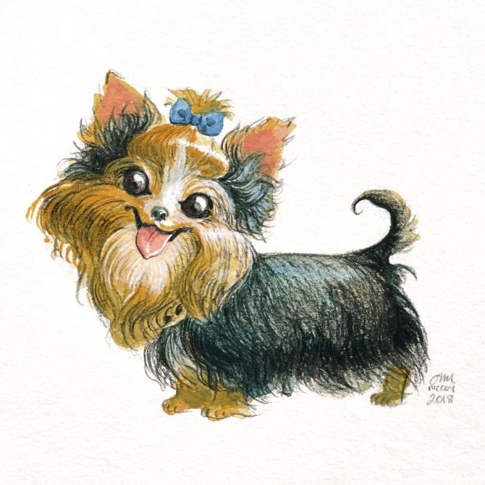 Portrait-of-Yorkie-in-gouache-and-colored-pencil-by-Abigail-McCoy