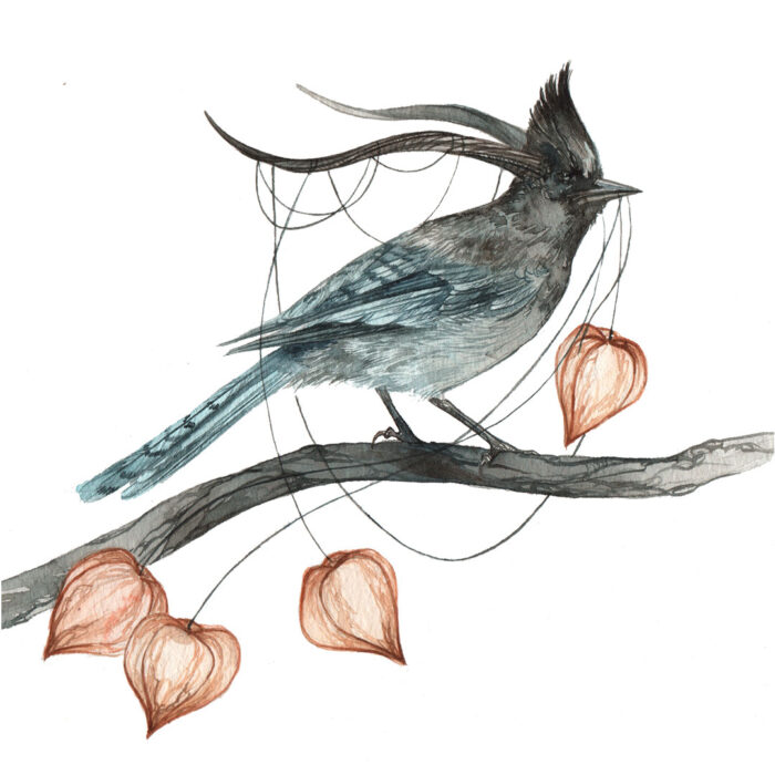 Original Watercolor of a Stellar Jay with Horns